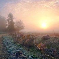 утро осени :: Elena Wymann