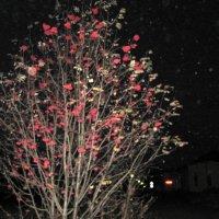 Свет ночных рябин... :: Антонина Балабанова