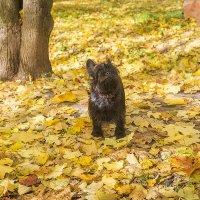 Падают листья... :: Ирина Будагова