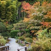 Осень в Японии :: Кристина Цой