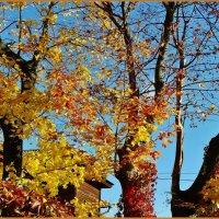 Краски на палитре осени ... :: Святец Вячеслав