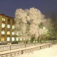 Заиндевелое дерево :: Андрей Мартюшев