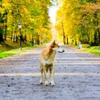 в красках осени :: Олеся Семенова