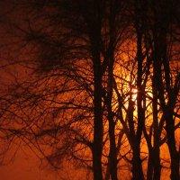 ночной туман, фонарь как солнце... :: Марина