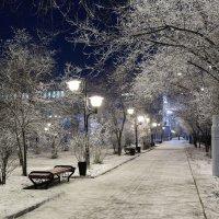 Вечерняя аллея. :: Александр Киргизов