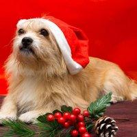 Новогодний Пёс :: Alex Bush