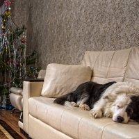 Тихо, Новый год, сторож спит. :: Сергей Степанов