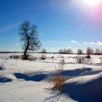 Весеннее солнце. :: Александр Атаулин