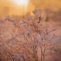 Последние вдохи зимы :: Катерина