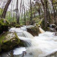 В потоке весны :: Александр Черный