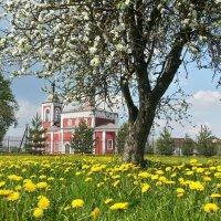 Весна :: Андрей Осипов