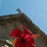 На Крите весна :: Константин Вергакис