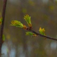 Весна не неизбежна. :: Анна Кокарева