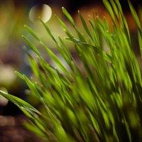 Весна :: AngAng