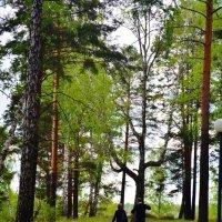Прогулки по лесу :: Katrin Bakeeva