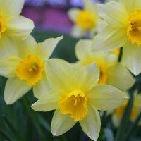 Весна пришла.... :: Анна Шишалова