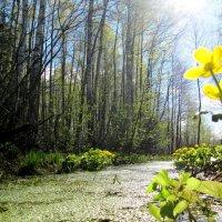 Весна на даче. :: Виктория Чурилова