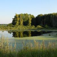 Река Яуза. :: эльвира