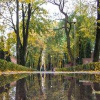 После дождя :: Ольга