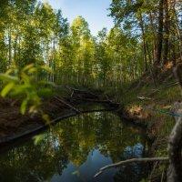 небо в реке :: Алексей Астапенко