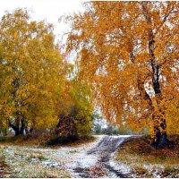 Осенняя роща... :: Алёна PRIVALOVA