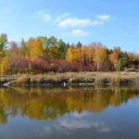 Разноцветная осень :: Мария Ларионова