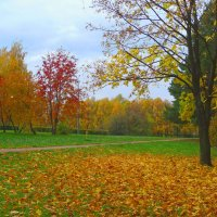 Золотая осень. :: Александр Атаулин