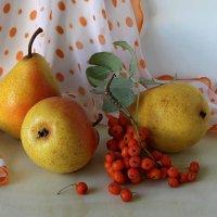 Натюрморт с грушами и рябиной :: Татьяна Смоляниченко
