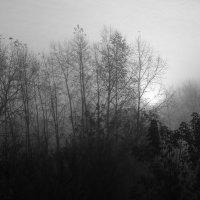 Туман :: Evgeniy Katin