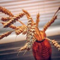 Колосья пшеницы :: Оксана