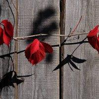 Осенняя гирлянда :: Лариса Валентинова