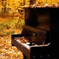 Осень :: Диана Калинина