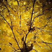 Золотая осень :: Елизавета Таничева