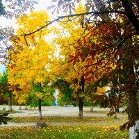 Осень осень. .. :: Юлия Закопайло