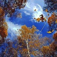 Осеннее небо :: Сергей Кудряшов