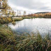 Осень на Кольском полуострове :: Ольга