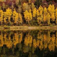 Осенние берёзки у воды :: Сергей Чиняев