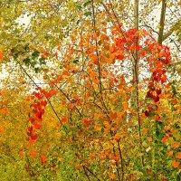 Осенняя акварель :: Светлана