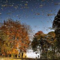 Отражения Осени. :: Алексей Зотов