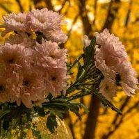 Цветы осени :: Александра