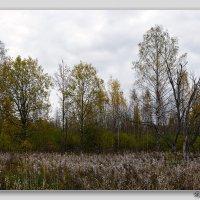 Осенний лес :: Niklaus