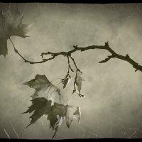 Последние листочки на дереве дрожат :: Nina Streapan