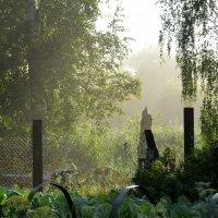 Утро в деревне :: Ольга Беляева