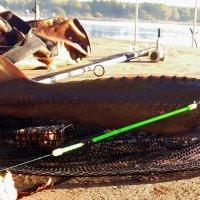 Утро на рыбалке :: Сергей М