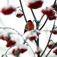 Красота зимней Сибири :: Евгения Сенченко