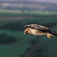 Свободный полет :: Светлана Баннова