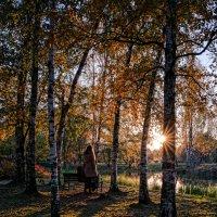 Осенний вечер в московском Ботаническом саду :: Алексей Саломатов