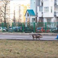 """""""Извините, что опоздала - автобус долго ждала..."""" :: Владимир Безбородов"""