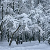 Зима :: Игорь Капуста