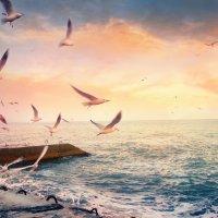 закат и чайки :: Солнечная Лисичка =Дашка Скугарева